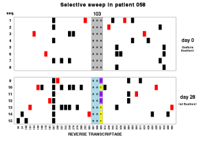 "Soft selective sweep in HIV. The K103N substitution is caused by an A to T or A to C mutation. In this patient both alleles are present. A clear example of a ""multiple-origin soft sweep""."