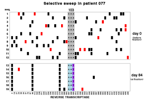 Selective sweep in HIV. An NNRTI drug resistance mutation (K103N) goes to fixation in patient virus. The mutation (A to T) apparently occurred on one haplotype (genetic background) and as it went to fixation, genetic variation on was lost. Not all sweeps in HIV are hard sweeps, see next figure.
